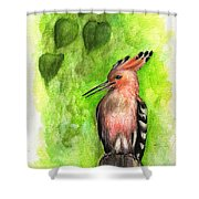 Hoopoe Shower Curtain