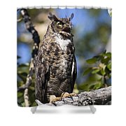 Hoot Hoot Shower Curtain
