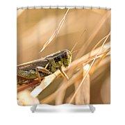Hopper In Golden Grass Shower Curtain