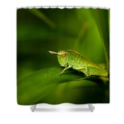Hopper Shower Curtain