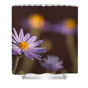 Horay Spine Aster Shower Curtain