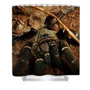 Hornback Baboon Spider Shower Curtain