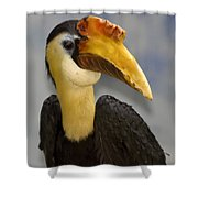 Hornbill 2 Shower Curtain