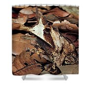 Horned Frog Camouflaged In Leaf Litter Shower Curtain