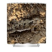 Horned Lizard   #8888 Shower Curtain