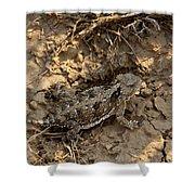 Horned Lizard   #8903 Shower Curtain