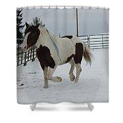 Horse 03 Shower Curtain