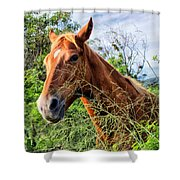 Horse 1 Shower Curtain