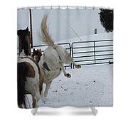 Horse 13 Shower Curtain
