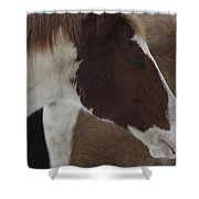 Horse 15 Shower Curtain