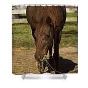 Horse 32 Shower Curtain