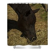 Horse 34 Shower Curtain