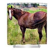 Horse 5 Shower Curtain