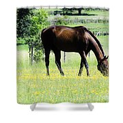 Horse And Flowers Shower Curtain