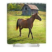 Horse And Old Barn In Etowah Shower Curtain