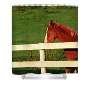 Horse And White Fence Shower Curtain