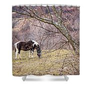 Horse And Winter Berries Shower Curtain