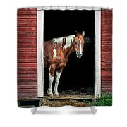 Horse - Barn Door Shower Curtain