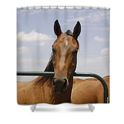 Horse Beauty Shower Curtain