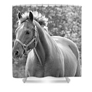 Horse Black And White Shower Curtain