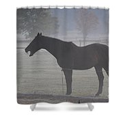 Horse Body Language  Shower Curtain