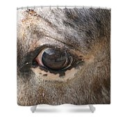 Horse Close Up Shower Curtain