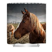 Horse Composition Shower Curtain