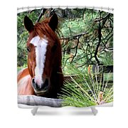 Horse Country Shower Curtain