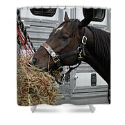 Horse Eating Hay Shower Curtain