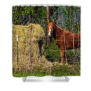 Horse Eating Hay In Eastern Texas Shower Curtain