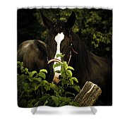 Horse Fence Shower Curtain