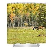 Horse Grazing In Field Autumn Maine Shower Curtain