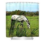 Horse Grazing In Field Shower Curtain