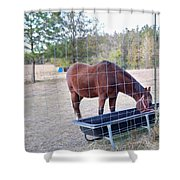 Horse Grazing Shower Curtain