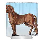 Horse Historiae Animalium  Shower Curtain