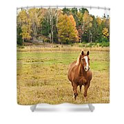 Horse In Field-fall Shower Curtain