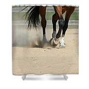 Horse In Motion Shower Curtain