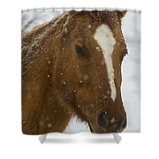 Horse In Snow   #4651 Shower Curtain