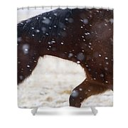 Horse In Snow   #5425 Shower Curtain