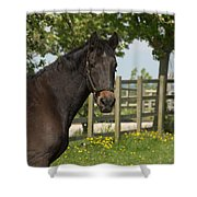 Horse In Spring Shower Curtain