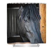 Horse In Stable Shower Curtain