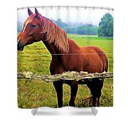 Horse In The Pasture Shower Curtain