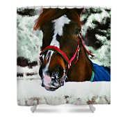 Horse In The Snow Shower Curtain