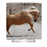 Horse Jumping Shower Curtain