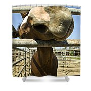 Horse Nose Shower Curtain