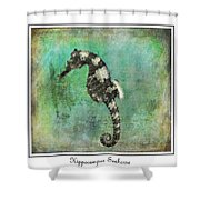 Horse Of The Sea Shower Curtain