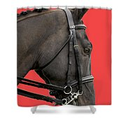 Horse On Red Shower Curtain
