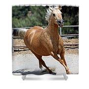 Horse On The Run Shower Curtain
