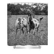 Horse Play Shower Curtain