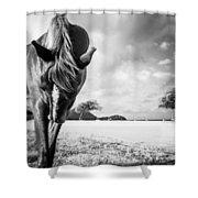 Horse Play Shower Curtain